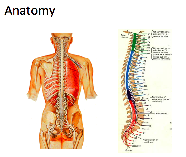 12-3, Intro to Spinal Disorders (Yu) Flashcards | Memorang