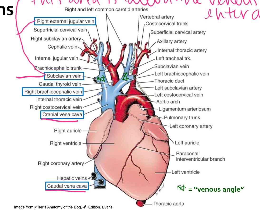 Anatomy Test 2 Lectures (Lectures) Flashcards | Memorang