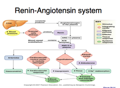 Physiology quizlet cardio flashcards memorang draw the renin angiotensin system in terms of a flow chart ccuart Choice Image