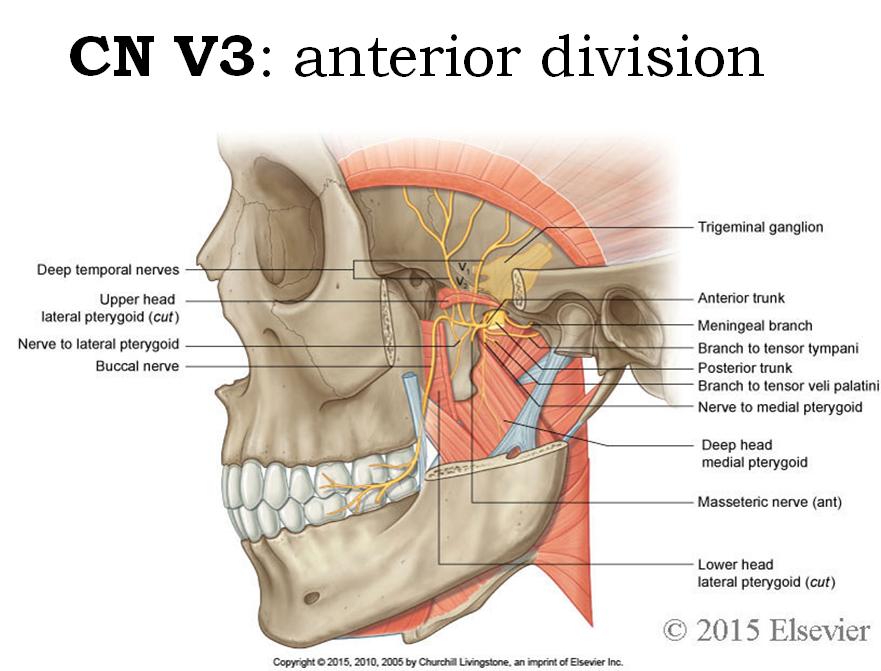 Ungewöhnlich Leberorgansystem Ideen - Anatomie und Physiologie des ...