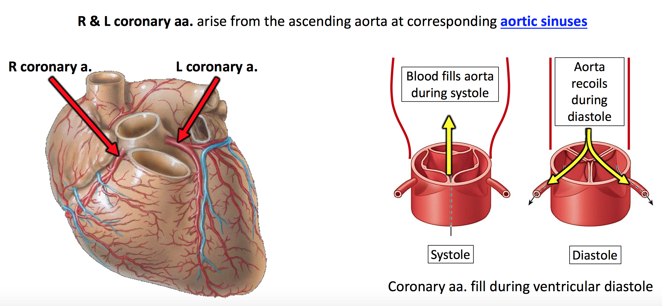 Why Is The Coronary Artery Called An Artery Even Though Artery Are