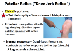 Jerk Knee Test