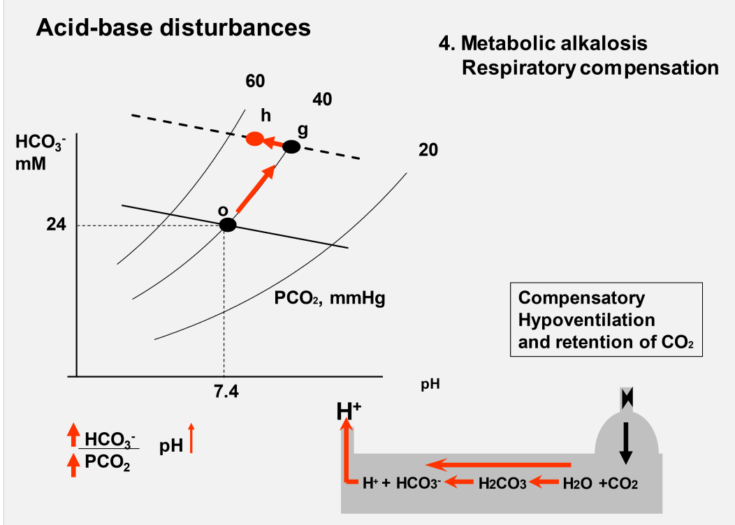 Acid base balance week 5 flashcards memorang what change would you see in a davenport diagram during metabolic alkalosis with compensation ccuart Images