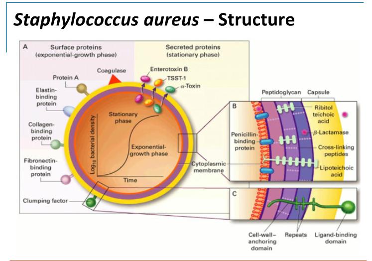 Mrsa Nature Reviews Microbiology
