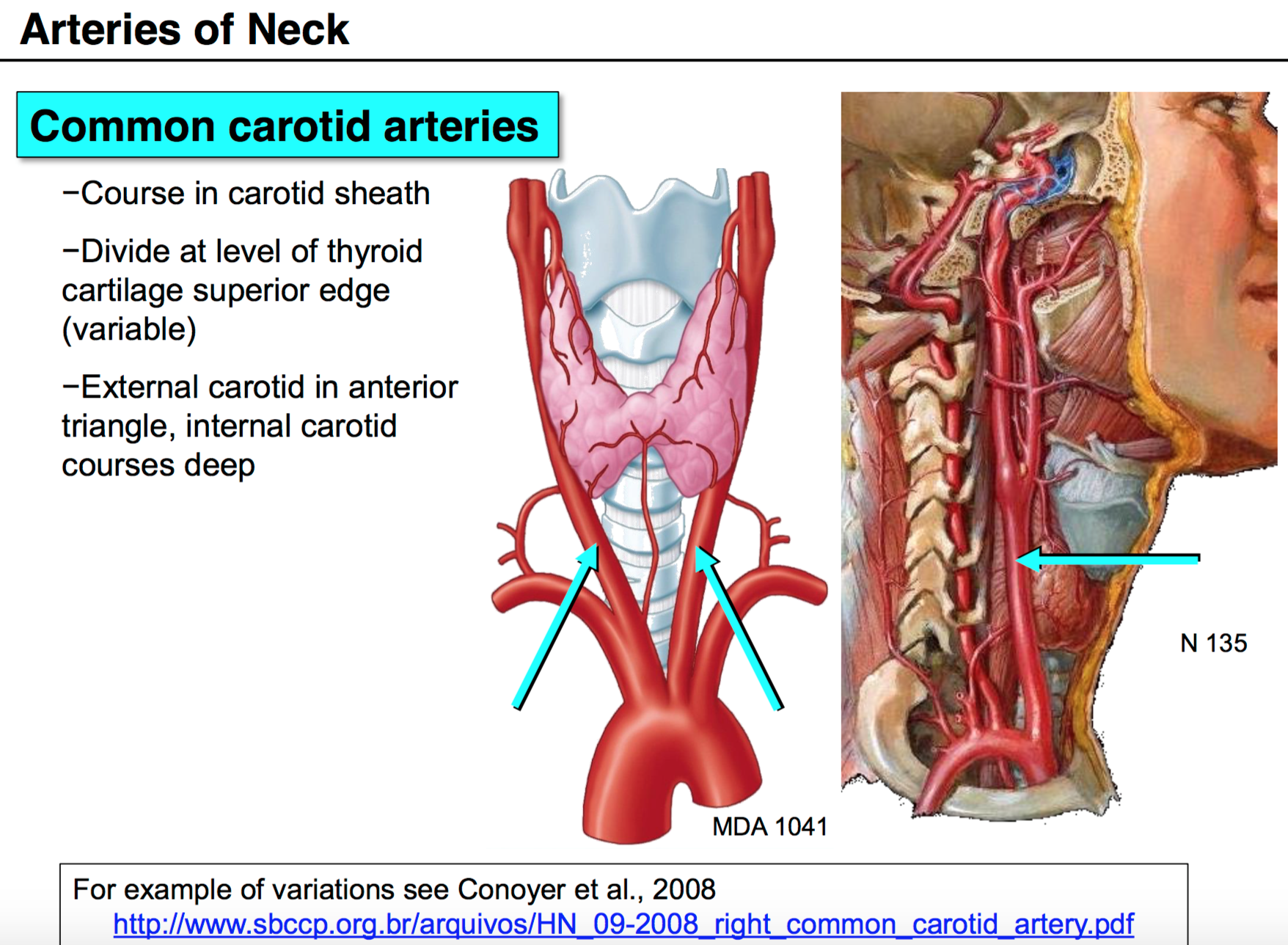 09 Anatomy G54 Neck 2 Terms From Anatomy G54 Neck Ii Lordfred