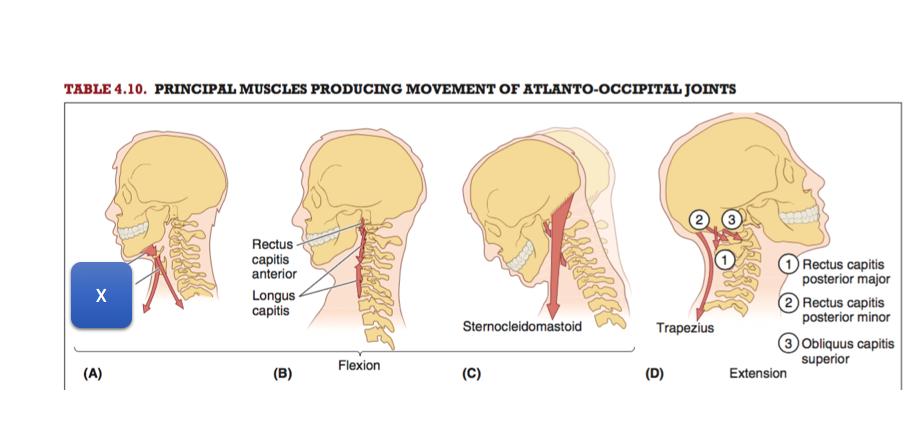 Anatomy 1 Week 3 Quiz 3 Set O (Muscle/veins of Back