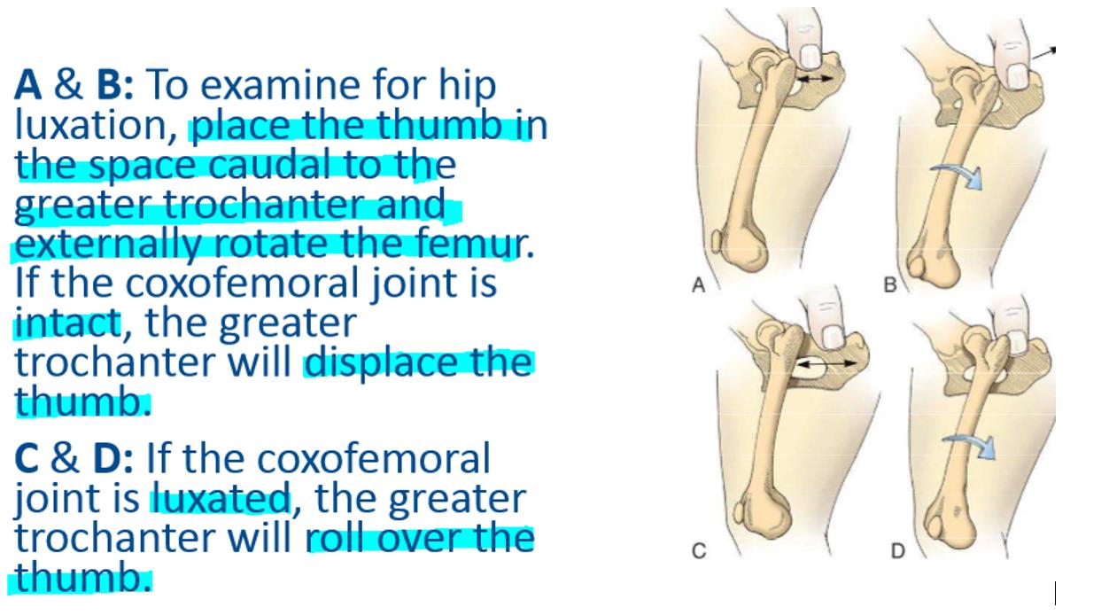 SP17 Small Animal Orthopedic Surgery E3 (Cvm, elbow, hips ...