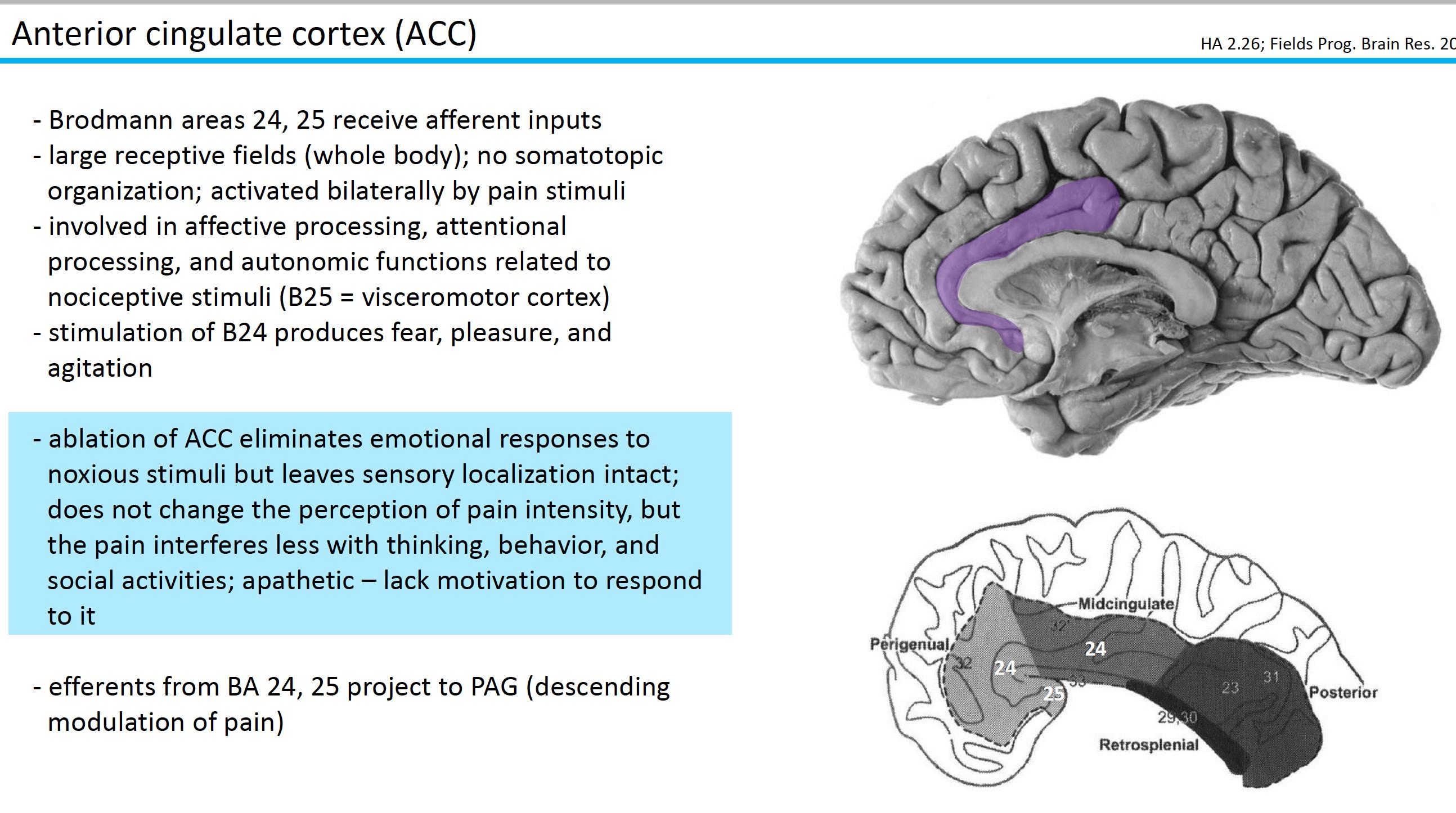 Neuroscience L59 Chronic Pain Syndrome Neuroscience Unit 5