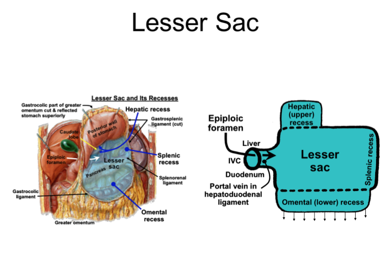 Clinical Correlations Of Lesser Sac Lecture 4 Gross Anatomy