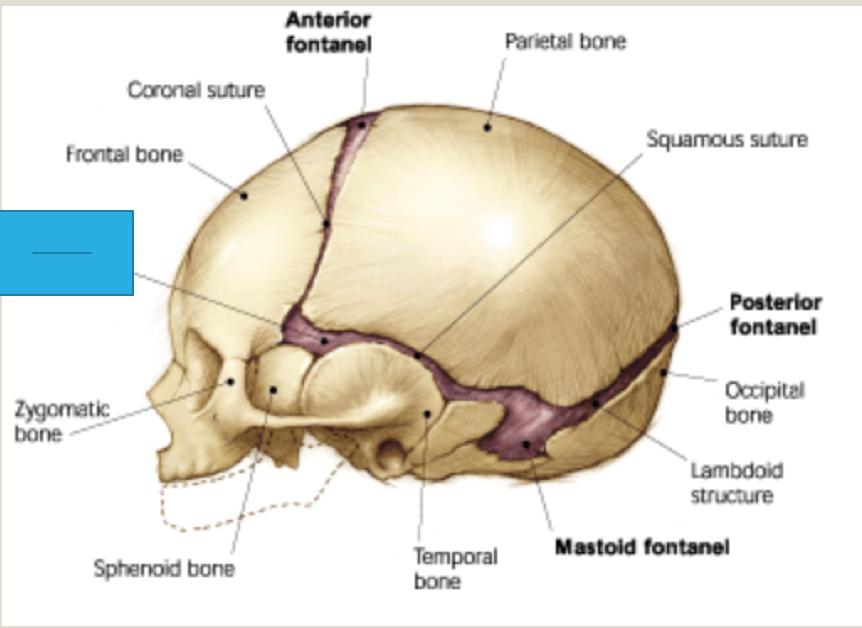 Wk 2 Anatomy Part 3 Anatomy Week 2 Flashcards Memorang