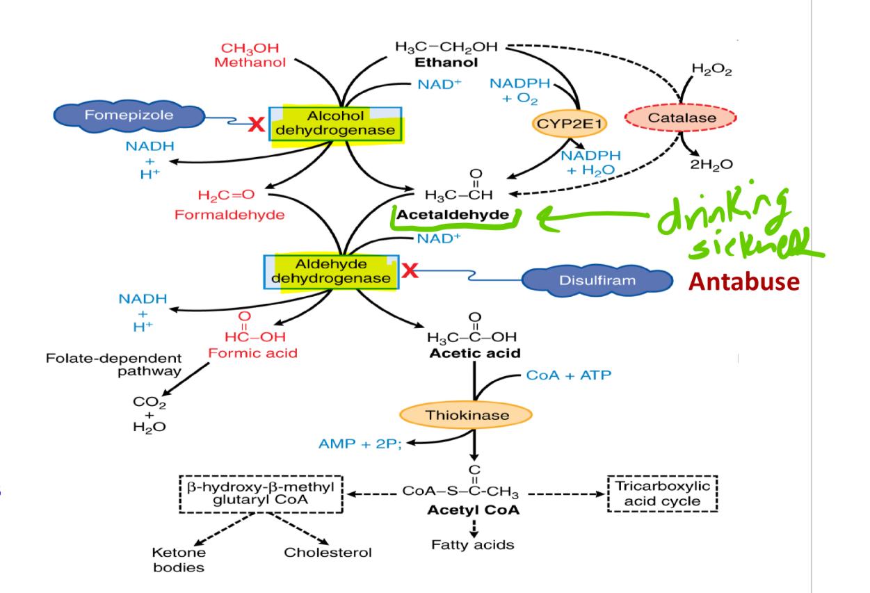 Adverse Drug Effects (second week) (RC ) Flashcards | Memorang