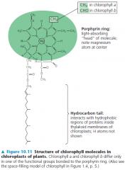 Photosynthesis (Biology) Flashcards   Memorang