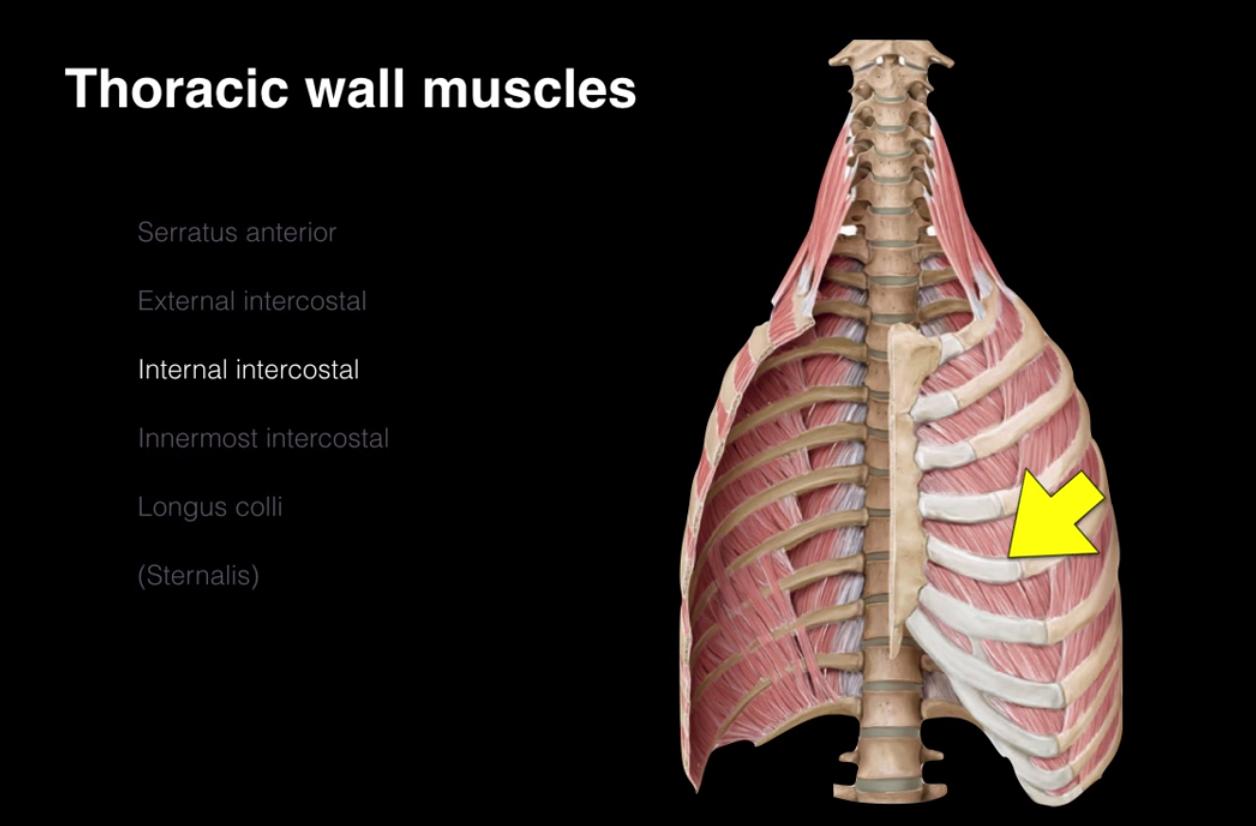 Anatomy (weeks 3&4) Flashcards   Memorang