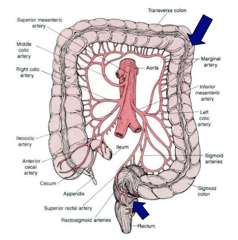 Rectosigmoid Junction Anatomy Gallery - human anatomy diagram organs