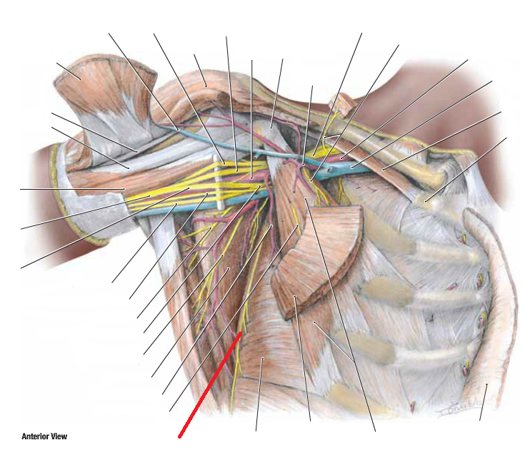 Diagram Of Thoracic Nerve Bell - Auto Wiring Diagram Today •