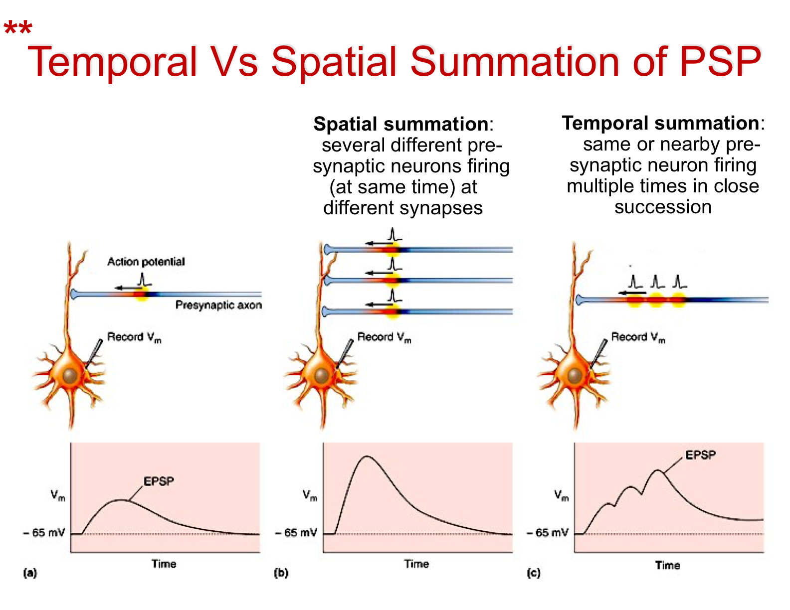 Image result for temporal and spatial summation