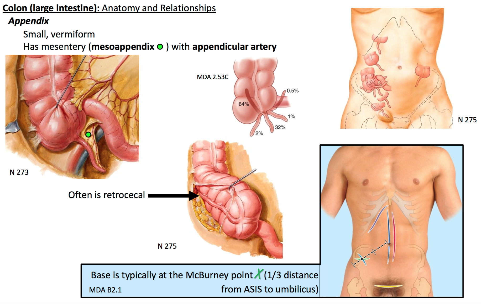 Perfect What Region Is The Appendix Located Pictures - Human Anatomy ...