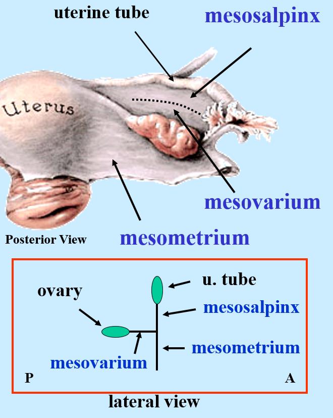 b3_anatomy flashcards | memorang, Human Body