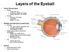 3 layers of the eye