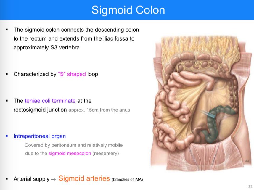 Gastroesophageal Junction Anatomy Images - human body anatomy