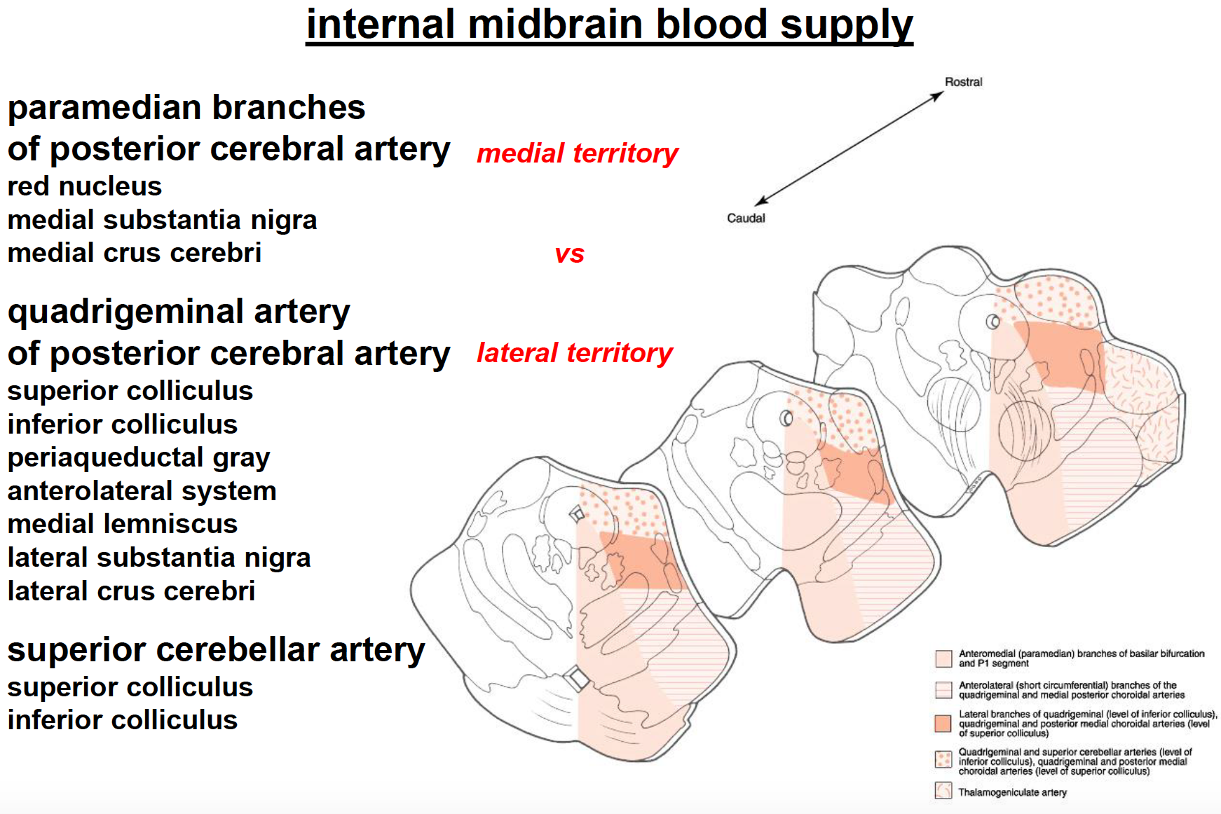 Neuroscience L3-4 Internal Anatomy (Neuroscience Unit 1) Flashcards ...