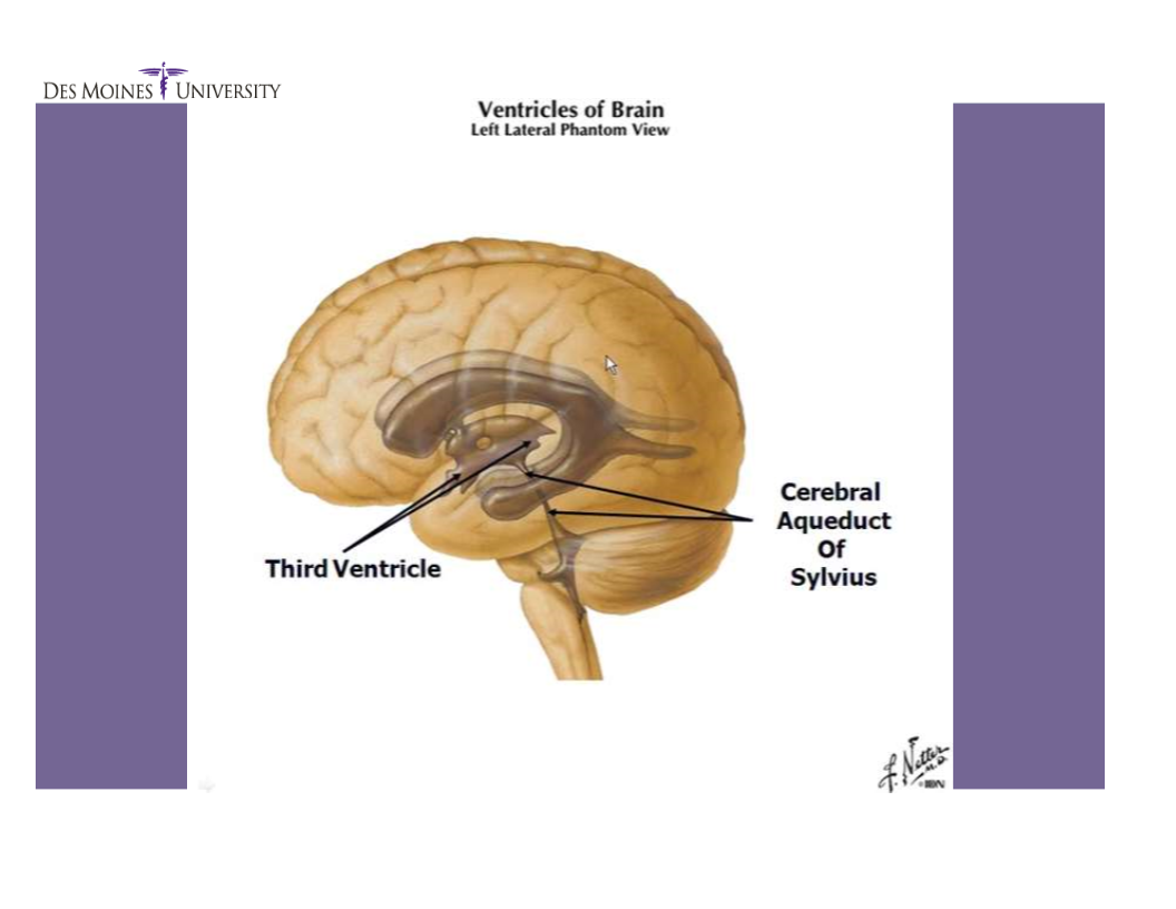 Meninges and ventricles (Neuroanatomy: meninges and ventricles ...