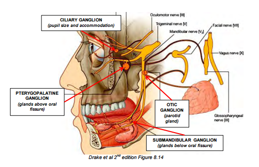 Parotid, Temporal, Infratemporal and Pterygopalatine Regions (CNS ...