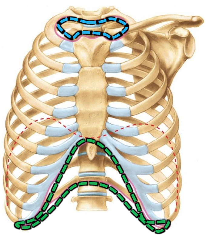 Anatomy GS19 Thoracic Wall & Breast - Updated (LordFred Updated ...