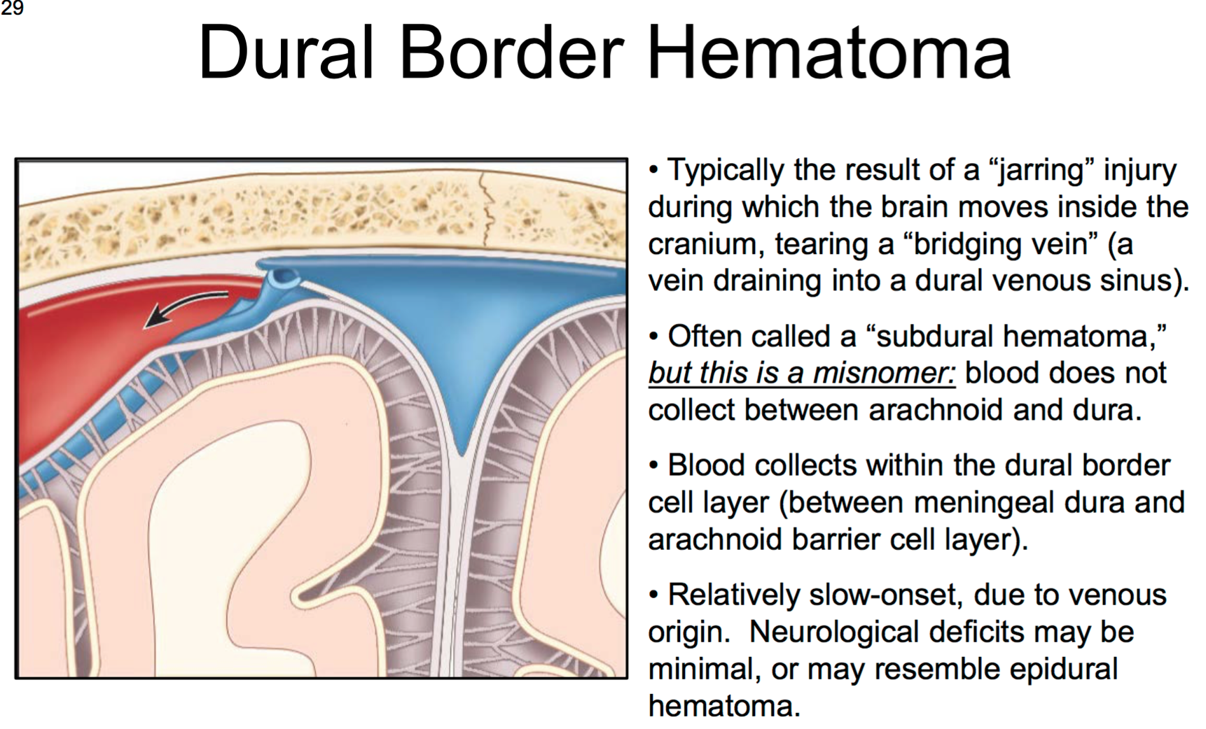 26. Anatomy G56 Brain, Dura, & CNS Blood Supply Flashcards | Memorang
