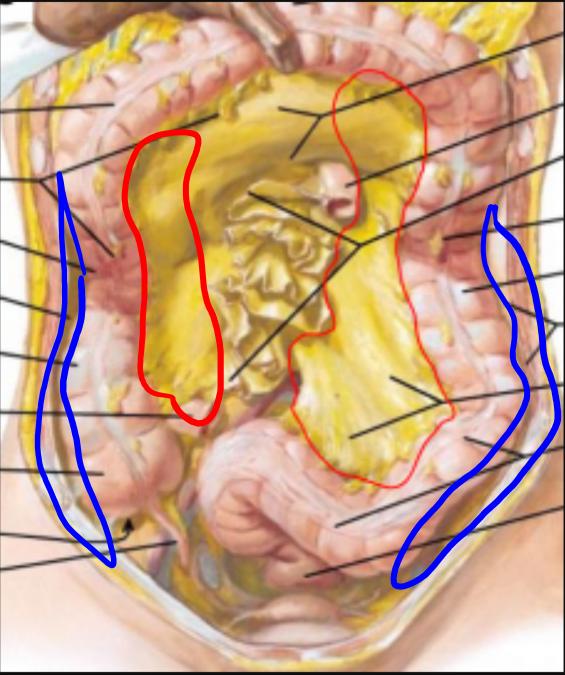 Gi Practical Abdominal Cavity Gi Stuff Flashcards Memorang