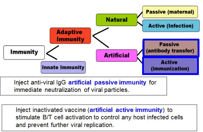 Vaccines Micro Flashcards Memorang
