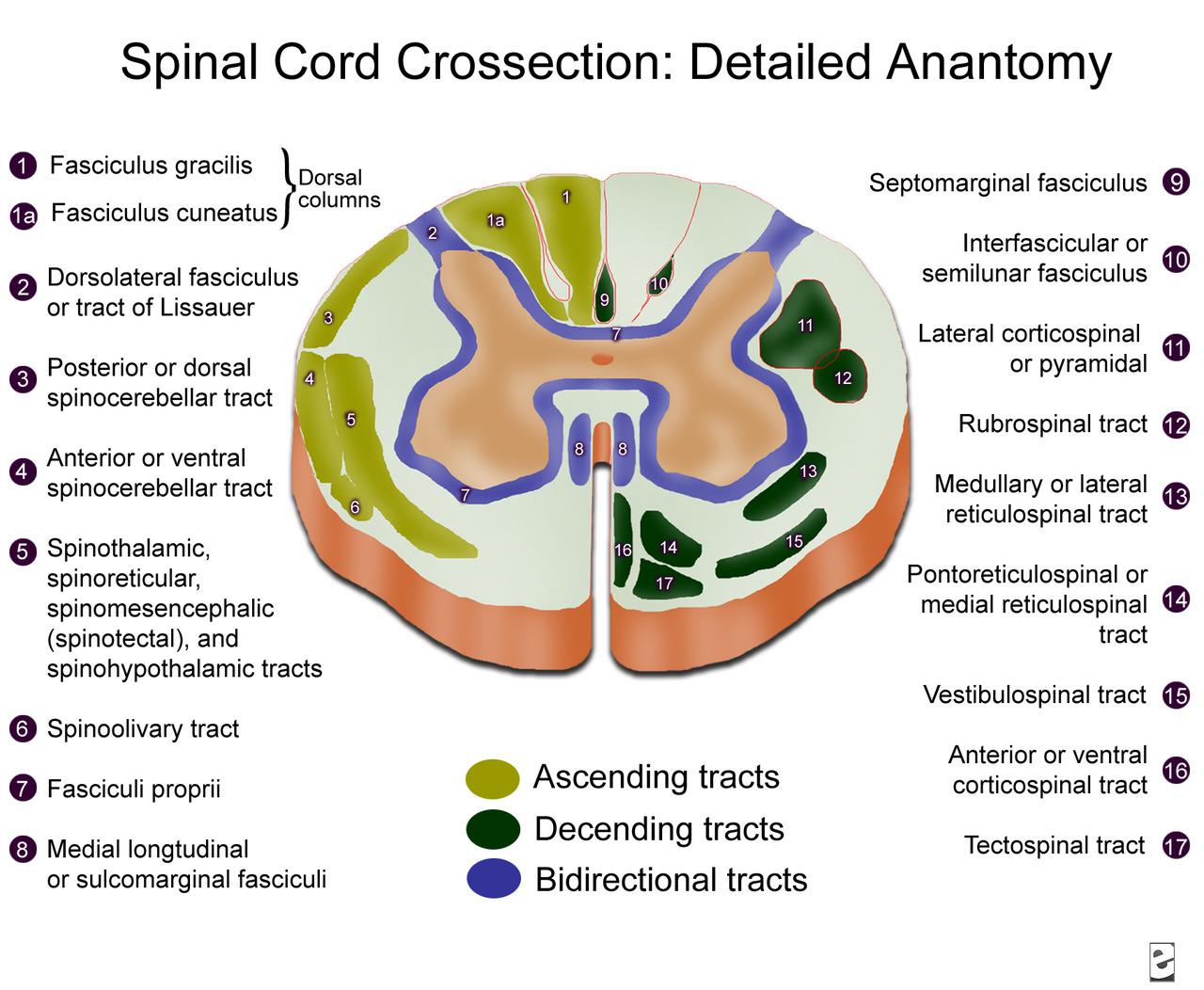 Spinal Cord Injury Sci Npte Nervous System Flashcards Memorang