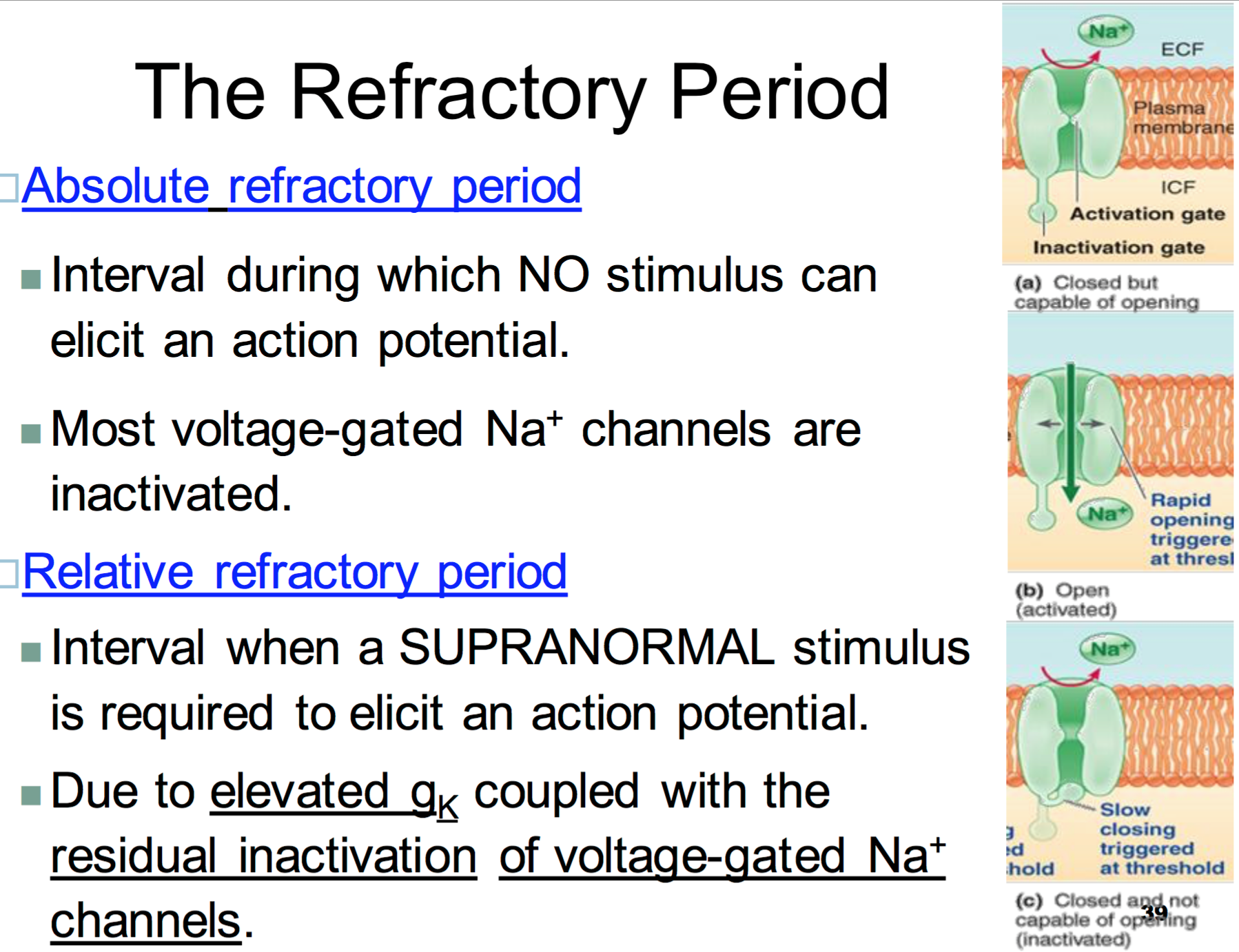 action potential activation and inactivation gates