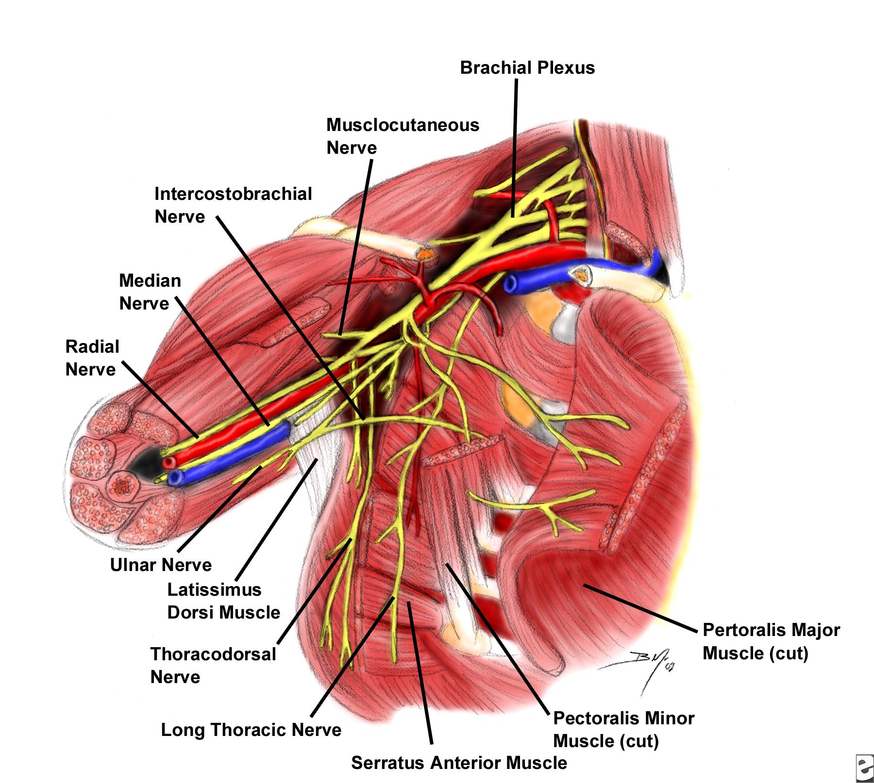 New Palpable Mass Nbme Surgery Shelf Exam Breast Flashcards