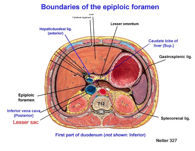 Omental foramen boundaries in dating
