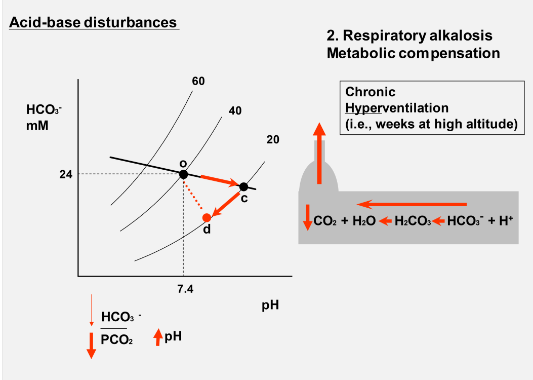 Acid base balance week 5 flashcards memorang what change would you see in a davenport diagram during respiratory alkalosis with compensation ccuart Images