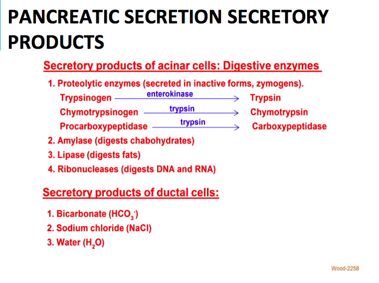 8-11 Physio of Pancreatic & Biliary Secretion (Wood GI) Flashcards ...