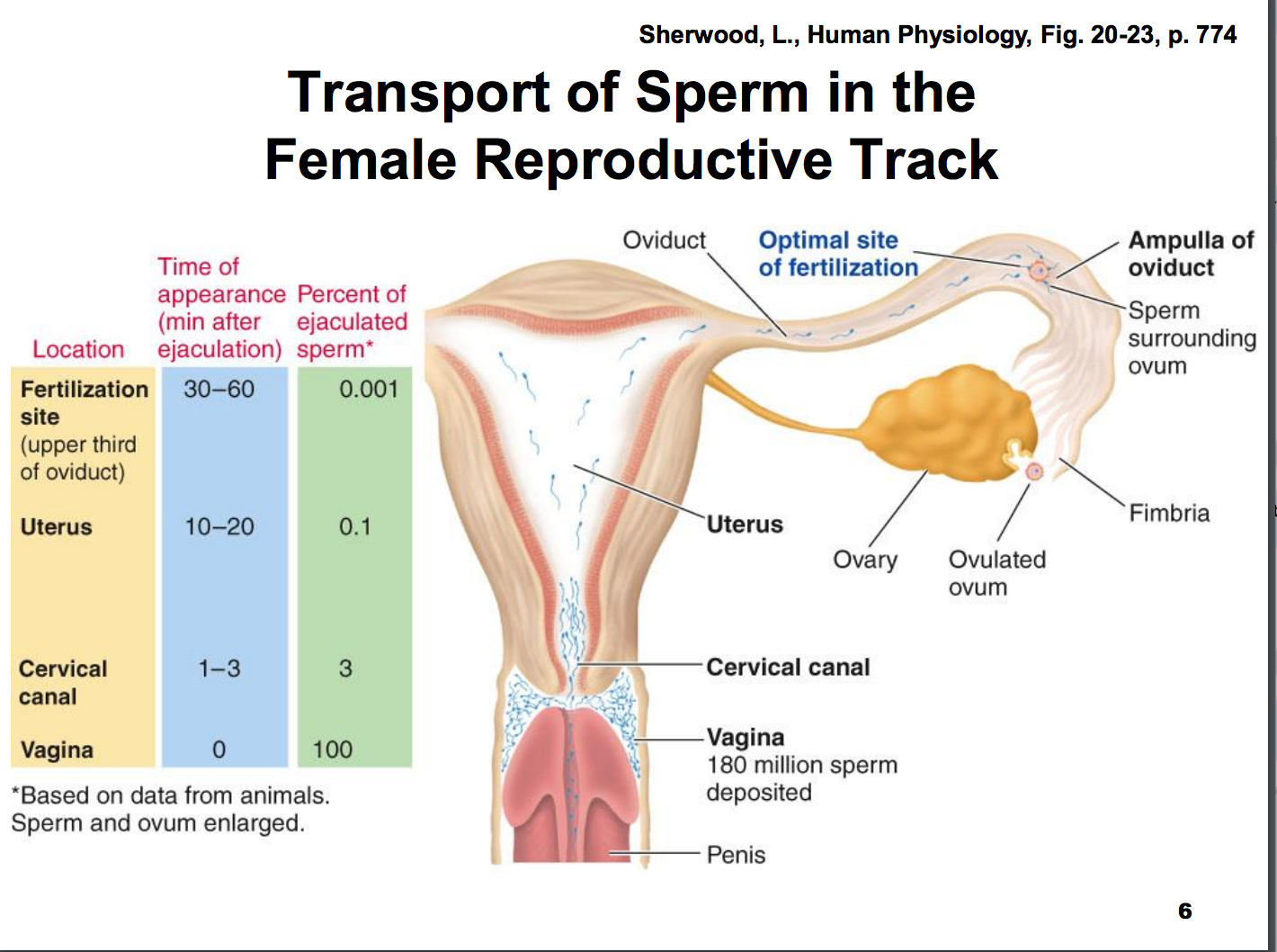 Sperm survival in vagina
