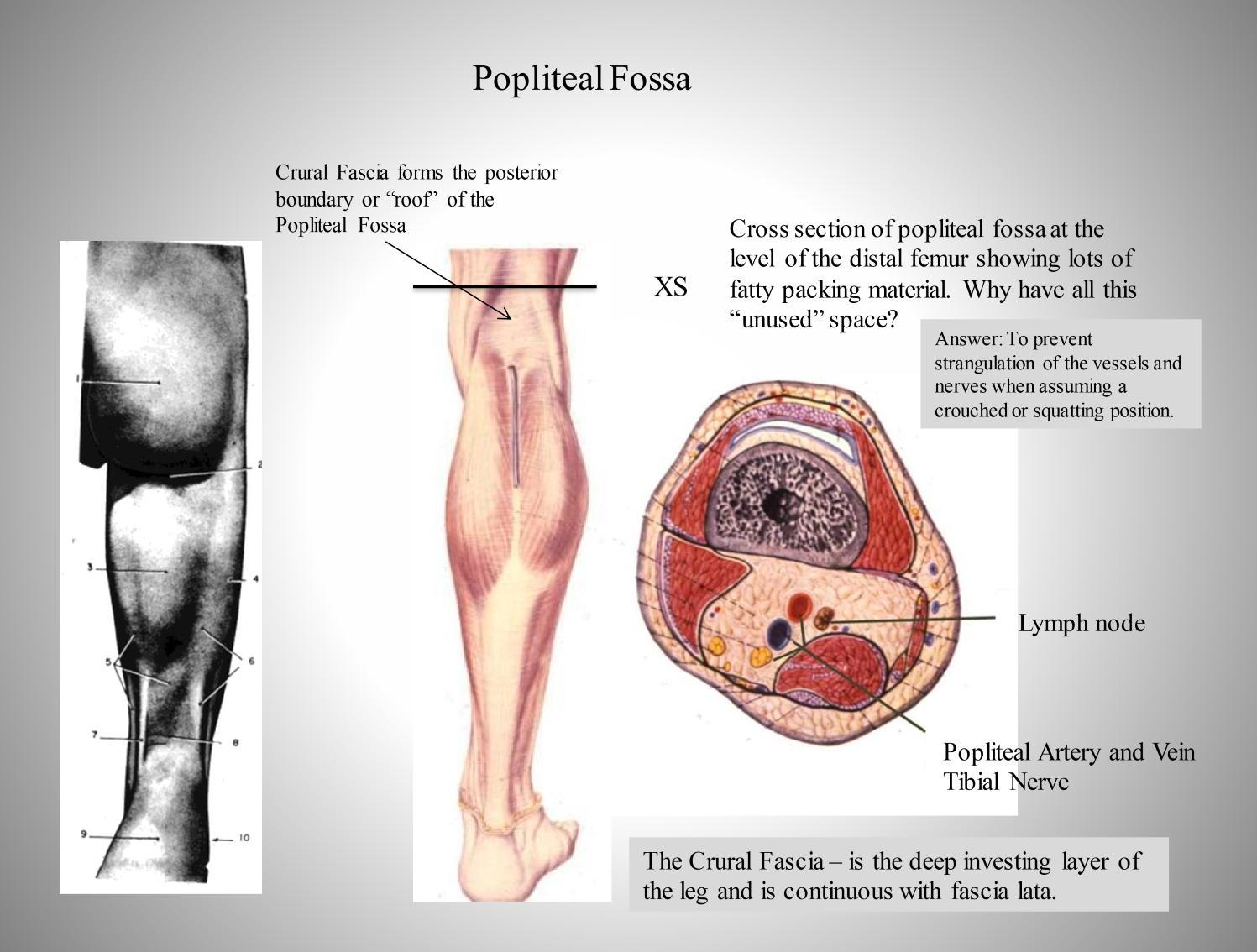 Lower Leg Anatomy Mm 5 Flashcards Memorang