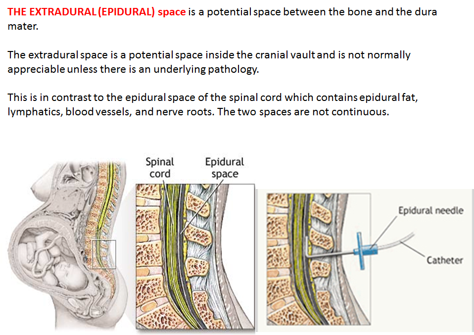 Fantastic Anatomy Of Epidural Space Photos Anatomy And Physiology