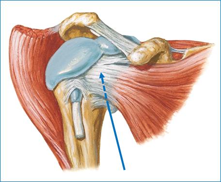 Joints Of Upper Limbs Joints Of Upper Limbs 11 21 17 Flashcards