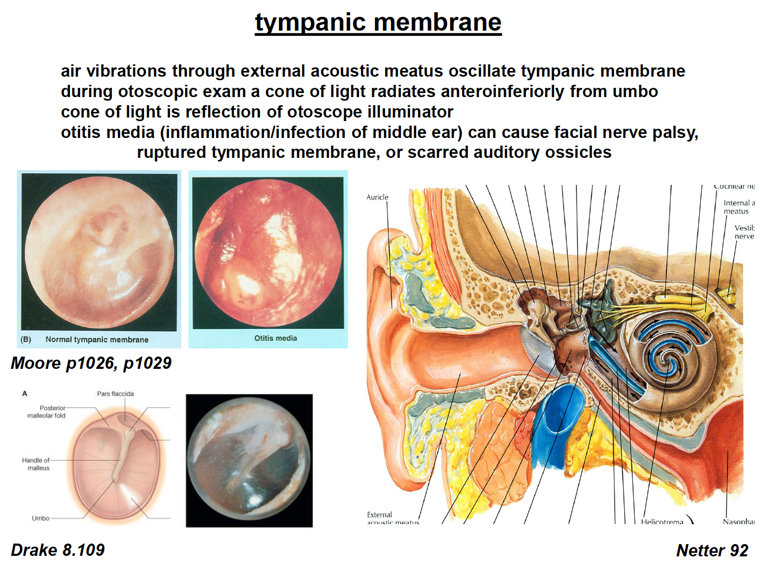 Neuroscience L43-46 Auditory System Part I (Anat. of Ear ...