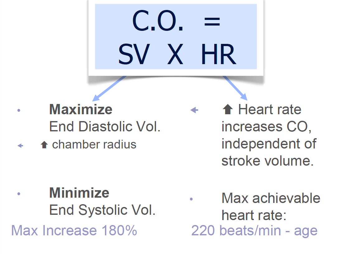 Cardiac Adaptation Hypertrophy and Remodeling 8/29 (Cardio