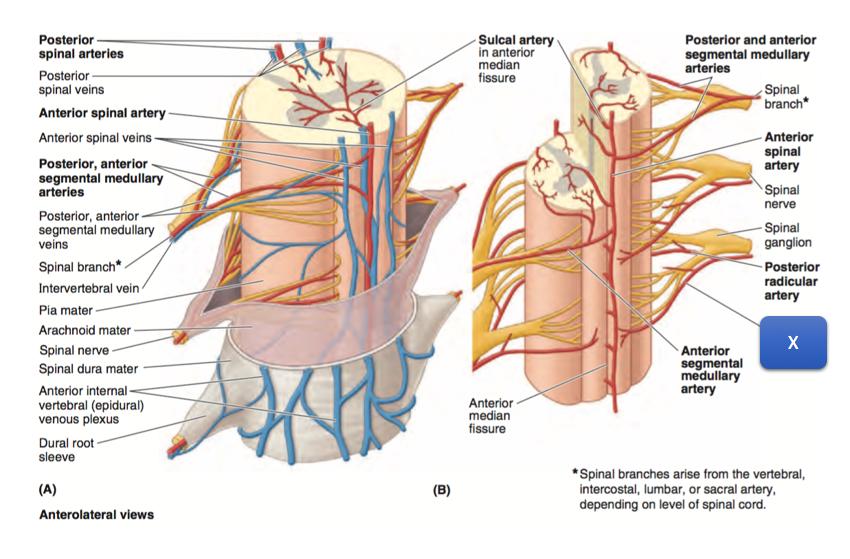 Anatomy 1 Week 3 Quiz 3 Set Z1 Muscleveins Of Back Flashcards