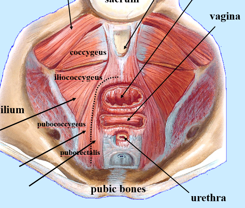 What Are The Bony Structures Th And More Terms From B3anatomy