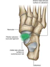 The Foot and Ankle Joint Anatomy (The Foot and Ankle Joint Anatomy ...