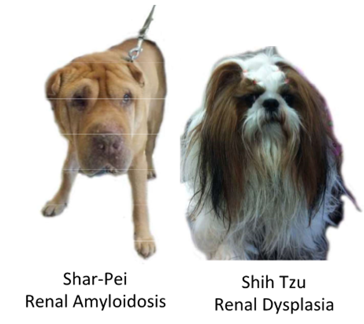 FA16 Small Animal Medicine E7 (Cvm, urinary/renal