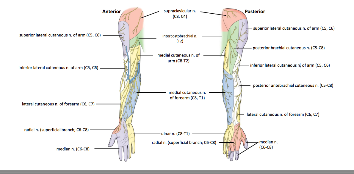 Anatomy Gs10 Ue Unit 10 Terms From Anatomy Unit 10 Flashcards