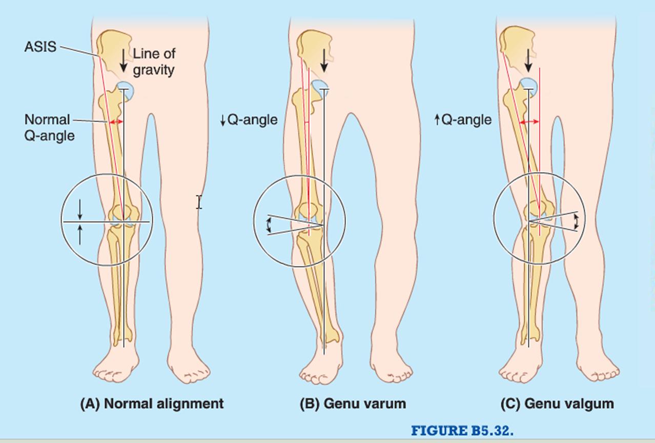 012B - Knee Joint (Anatomy) Flashcards | Memorang