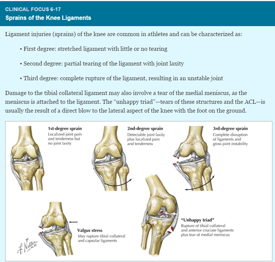 012 - Hip, Knee, and Ankle (Anatomy) Flashcards | Memorang